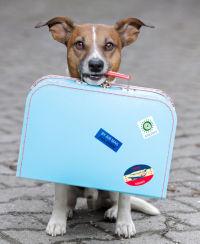 Pet Custody Battles: 5 Tips for Keeping the Family Pet